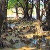 みんなが知らない沖縄のマングローブ林☆羽地内海の干潟(名護市)