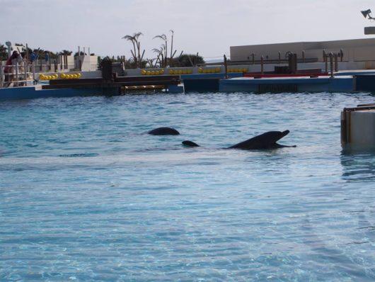 美ら海水族館 沖縄県 イルカ