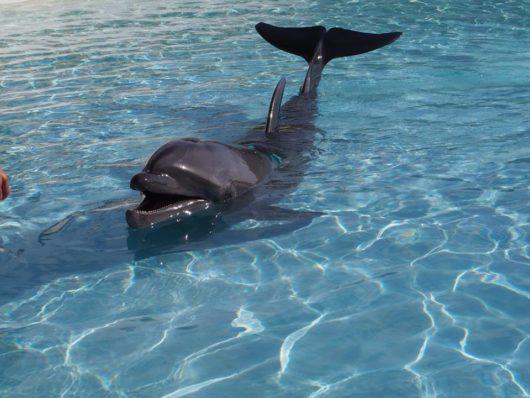 美ら海水族館 沖縄県 イルカの給餌体験