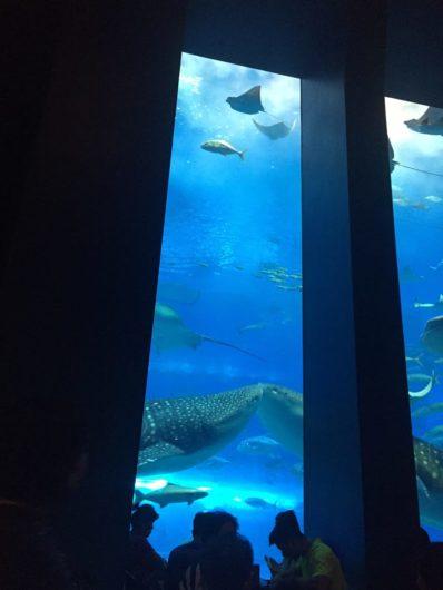 沖縄美ら海水族館 ジンベイザメ