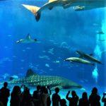 沖縄美ら海水族館 沖縄県 黒潮の海 大水槽