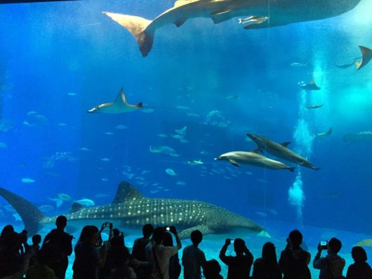 美ら海水族館 沖縄県
