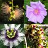 【まとめ】 沖縄で出会った植物たち 【開花時期順】