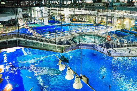 黒潮への旅 美ら海水族館