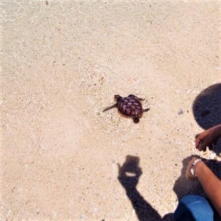 沖縄美ら海水族館 ウミガメ放流会