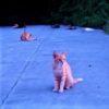 海のそばで暮らす猫
