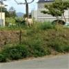 野良やぎだっています!沖縄県民に愛される動物No1☆山羊(やぎ)