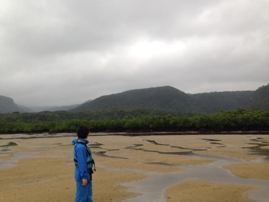 ヒナイ川のマングローブ