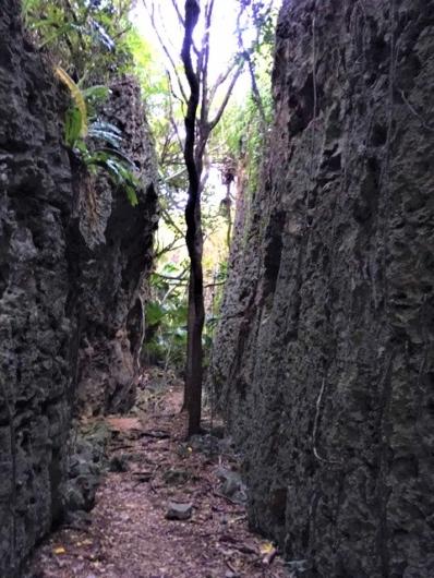 バリバリ岩 南大東島
