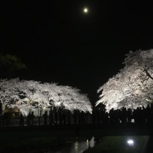 調布市 野川 桜のライトアップ
