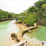川満のマングローブ林 宮古島