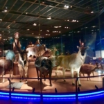 国立科学博物館 地球館