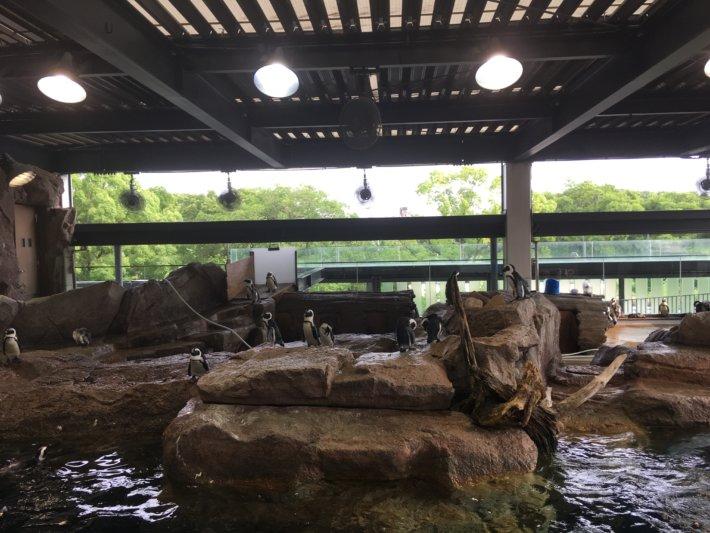 京都水族館 ペンギンウォーク