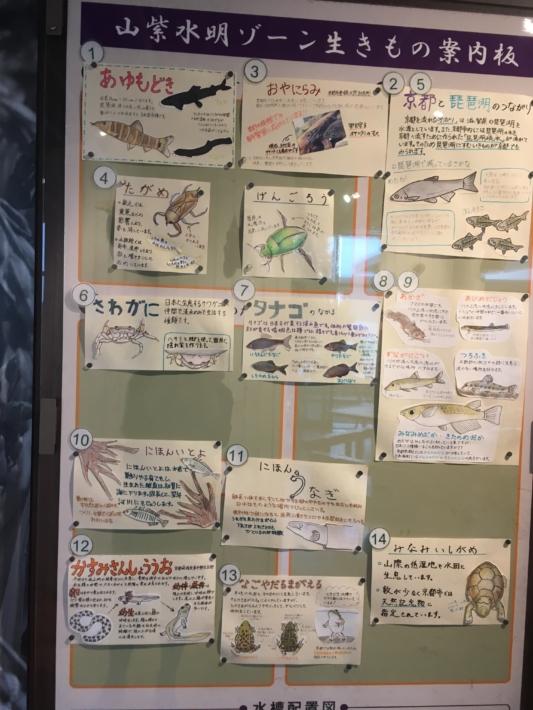 京都水族館 山紫水明