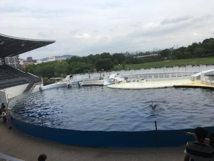 京都水族館 イルカスタジアム