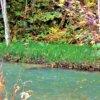 トクサ(砥草)学名Equisetum hyemale