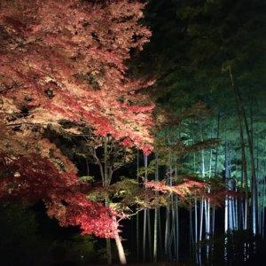 六義園 紅葉 ライトアップ