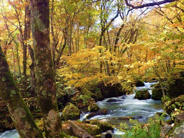 阿修羅の流れ 奥入瀬渓流