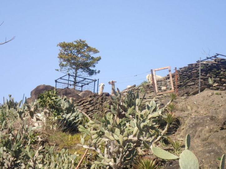長崎バイオパーク アンデス広場とラマの岩山