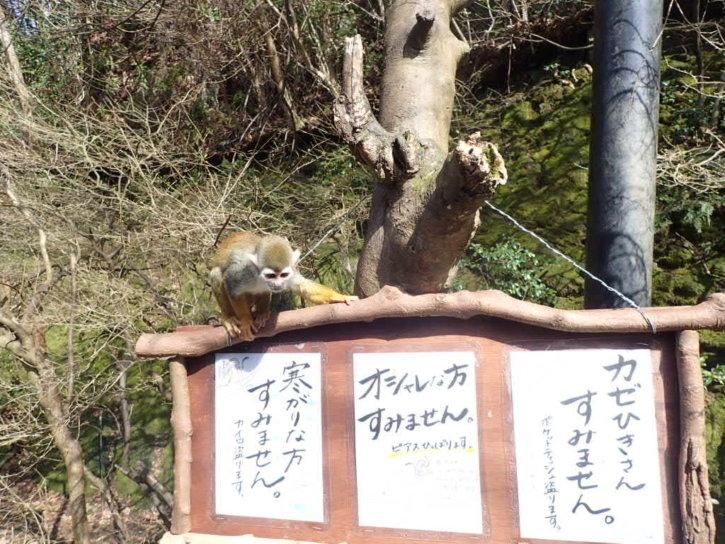 長崎バイオパーク リスザル