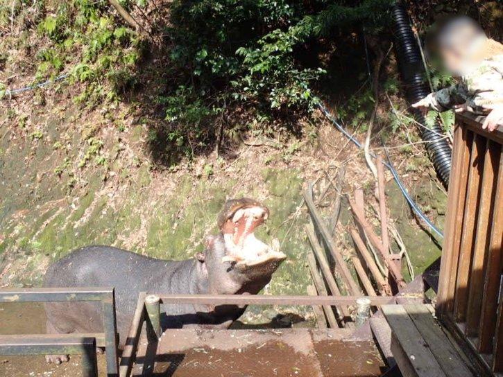 長崎バイオパーク カバの餌やり