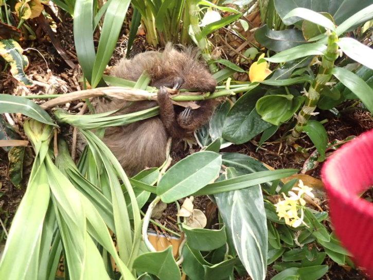 長崎バイオパーク ナマケモノの赤ちゃん