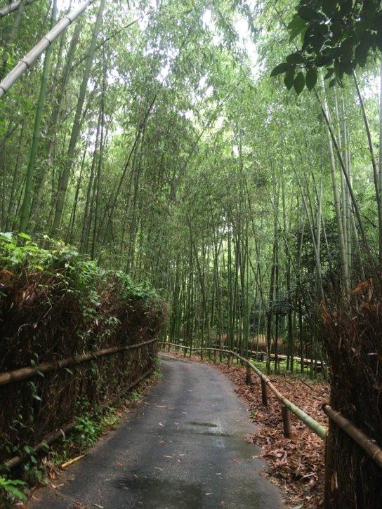 竹林の小径 嵯峨野 Path of Bamboo