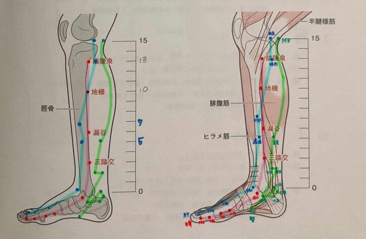 下肢の経絡 足の内側の経絡 順序 語呂合わせ